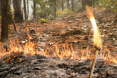 Bushfire in forest ,Thailand Royalty Free Stock Photo