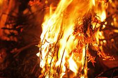 Bushfire up close Royalty Free Stock Image