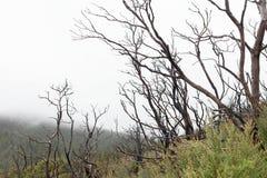 Bushfire uszkadzający drzewa Fotografia Royalty Free