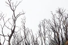 Bushfire uszkadzający drzewa Obraz Stock