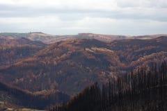 bushfire zniszczenie obraz stock
