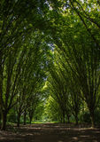 Bushi Park. Spring Trees in Bushi Park, London Royalty Free Stock Photos