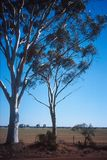 Bushland de l'Australie photos libres de droits