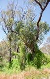 Bushland envahi Photographie stock