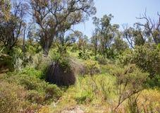 Bushland herbeux Image stock