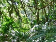 Bushland with palms Royalty Free Stock Image