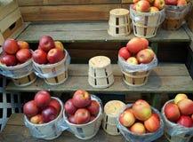 Bushlar av äpplen Arkivfoto
