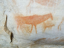 Bushman cave paintings in Cederberg royalty free illustration