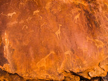 Bushman engravings in the granite rock, Twyfelfontein UNESCO World Heritage Site, Kunene Region, Damaraland, Namibia Royalty Free Stock Photography