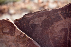 Bushman Rock Engravings - Namibia Stock Photography
