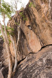Bushman rock paintings. Of animals, Botswana stock images