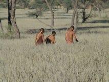 Bushmen hunters in a fields search Stock Image