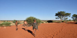 Bushmen hunters, Kalahari desert, Namibia Stock Photo