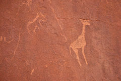 Bushmen Rock Engravings. Twyfelfontein Stock Photography