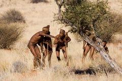 Bushmen san Royalty Free Stock Photo