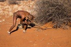 Bushmen sun Royalty Free Stock Images