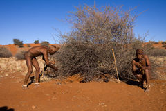 Bushmen sun Royalty Free Stock Photos