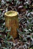 Bushshrub Stock Images