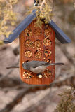 Bushtit On Feeder. A Bushtit eating from a bird feeder Royalty Free Stock Photography