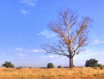 bushveld冬天 库存图片
