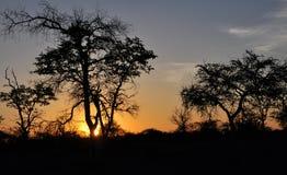 Bushveld日落,津巴布韦 免版税库存照片
