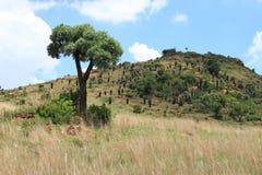 Bushveld imagen de archivo