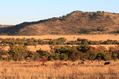 Bushveld Royalty Free Stock Photo