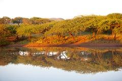 Bushveld黎明 免版税库存图片