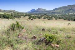 Bushveld africano con la cresta della montagna un giorno caldo del ` s di estate - caldo Fotografie Stock Libere da Diritti