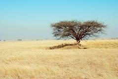 bushveld afrykańskiej Zdjęcia Royalty Free