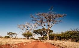 Bushveld droga Zdjęcie Stock