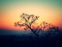 Bushveld Royalty Free Stock Image