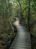 Bushwalk, New Zealand Stock Image