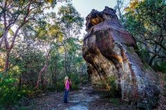 Bushwalker que explora a região selvagem do parque nacional fotografia de stock