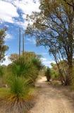 Bushwalking: Australia occidental Foto de archivo libre de regalías