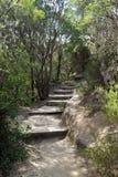 Bushwalking in Blue Mountains. Stock Photo