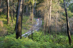 Bushwalking in Booderee National Park. NSW. Australia Stock Photography