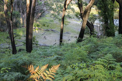 Bushwalking in Booderee National Park. NSW. Australia Stock Image