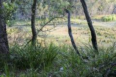Bushwalking in Booderee National Park. NSW. Australia Stock Images