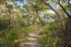 Bushwalking en Jervis Bay National Park Imagenes de archivo