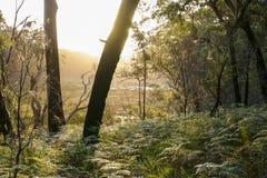 Bushwalking en parc national de Booderee NSW l'australie Image libre de droits