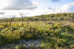 Bushwalking i den Booderee nationalparken NSW australasian Arkivbild