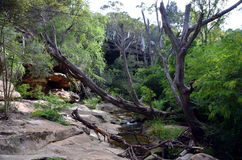 Bushwalking in Lane Cove National Park. Sydney, NSW, Australia Royalty Free Stock Photos