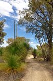 Bushwalking: Western Australia royalty free stock photo