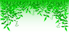 Bushy. Vector frame design of leafy vegetation Stock Image