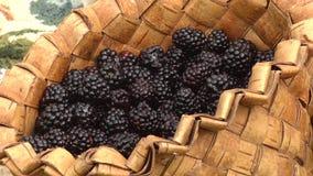 Bushy blackberry Rubus fruticosus. Medium-sized handmade birch bark box with berries stock footage