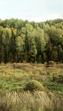 Bushy glade on the background of dense forest in autumn Royalty Free Stock Image