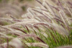 Bushy grass on wind Royalty Free Stock Photos