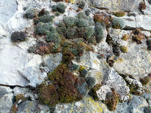 Bushy Moss on Rock Wall Stock Photos