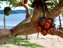 Bushy Trees Beach Fruit Stock Images